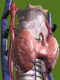 щитовидной железы симптомы у женщин фото